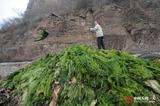 中国人的一天:水工扎根深山10年 年清水草上百吨