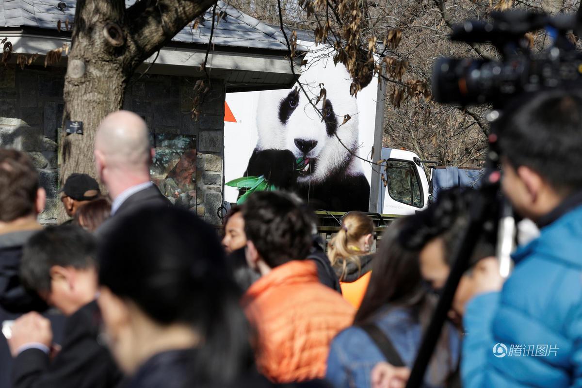 旅美大熊猫回国坐头等舱 数十人相送舍不得 - 海阔山遥 - .