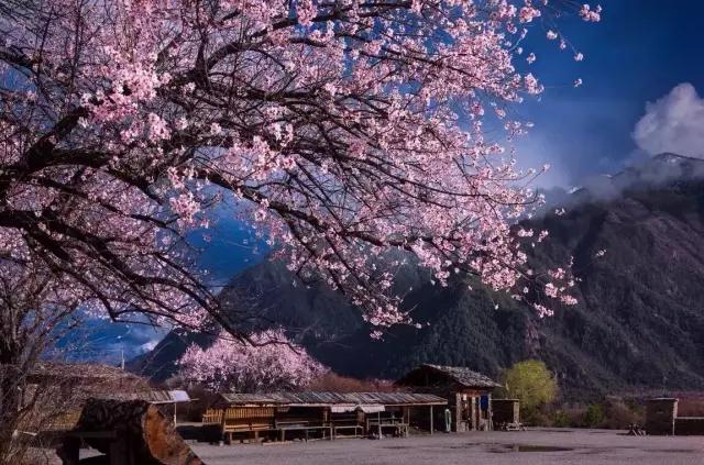 这里才是四海八荒最美的春天 - 海阔山遥 - .