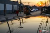 中国人的一天:老父开专车为女儿治病 每单提前一公里结算