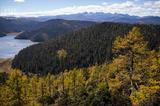 【鹅眼】守护失落天堂的神山圣水 云南森林人兼顾生态与效益