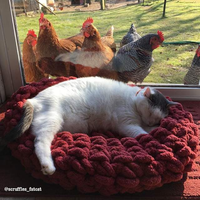 萌宠庄园:胖猫被一群鸡围观了