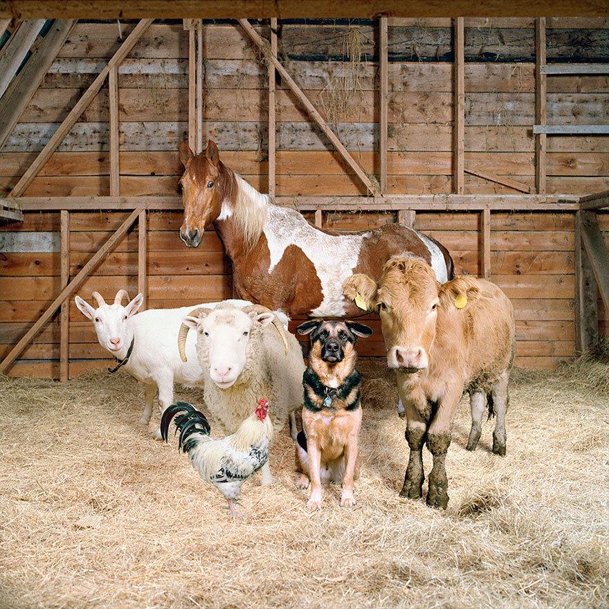 摄影师农舍为动物拍照 仿佛家庭合影