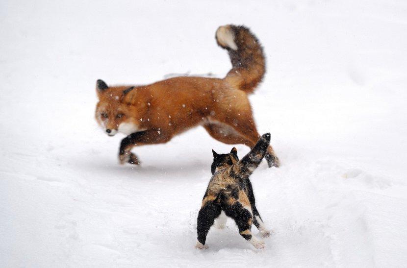 令人难忘的动物行为
