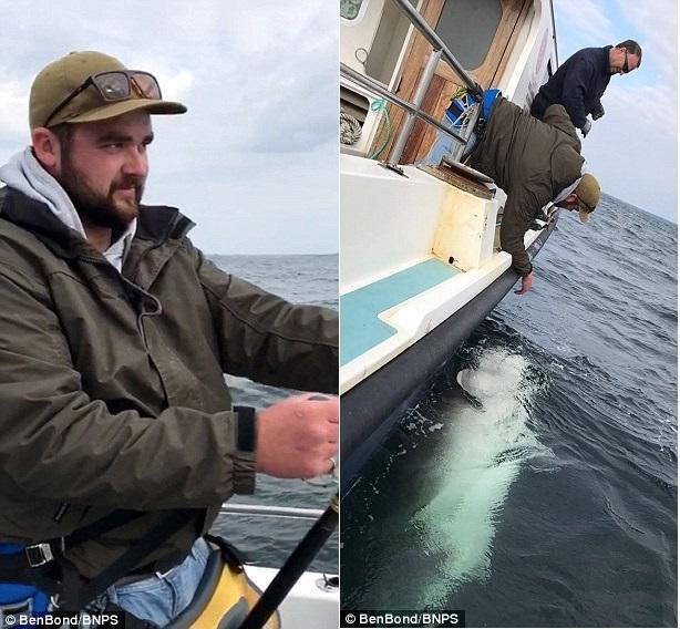 渔民鏖战90分钟 钓到1400斤鲨鱼