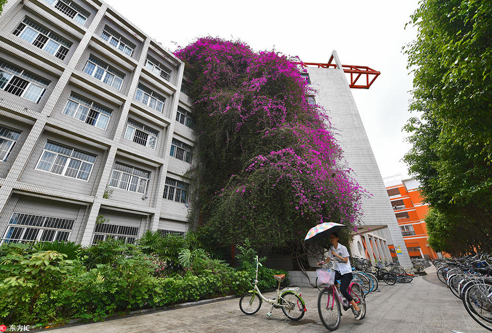 """广西大学现巨型""""鲜花瀑布"""" 18年长30米高2017.5.15 - fpdlgswmx - fpdlgswmx的博客"""