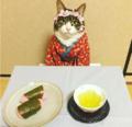 猫咪爱Cos美食当前坐怀不乱