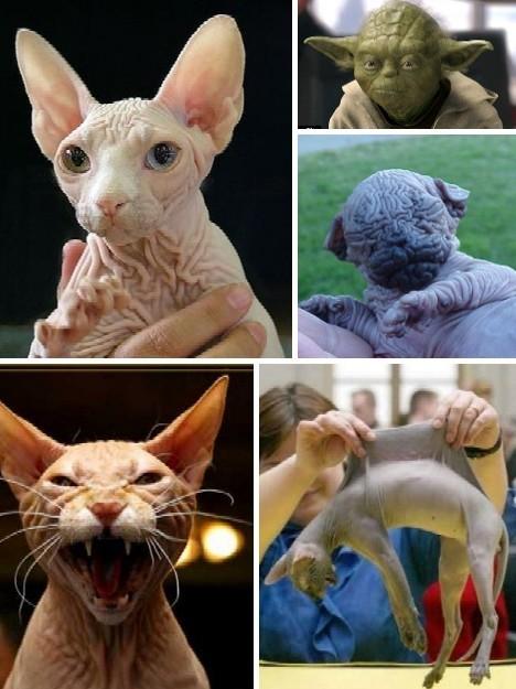 世界上最丑陋的动物