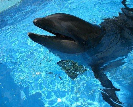 鲸类和其他不同种类的海洋哺乳动物进行杂交,听起来似乎不太可