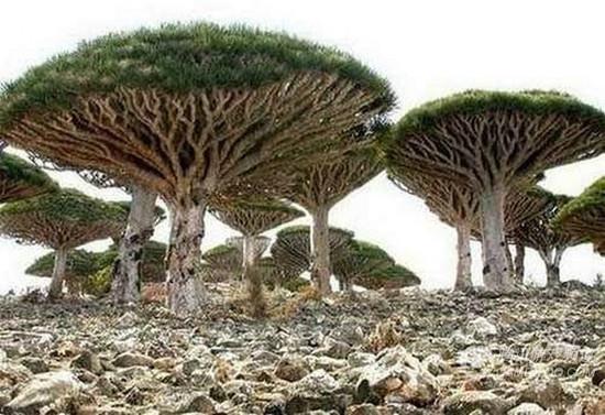 盘点世界上最为诡异的植物 - 秋天的景色 - ky0928的博客