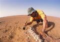 8大化石发现