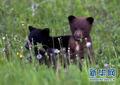 小熊大吃嫩草