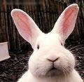 网络红兔变脸
