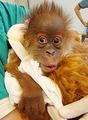 猩猩搞笑表情