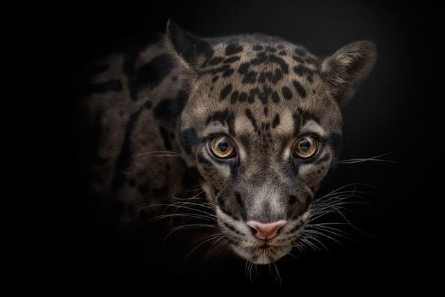 40张有趣的野生动物摄影作品