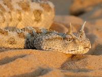 探秘令恐龙恐惧的远古蛇类:地狱巨蛇泰坦蟒