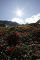雅鲁藏布大峡谷影像生物多样性调查之植物
