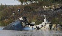 组图:俄冰球队出征遇空难 43死1生还1重伤