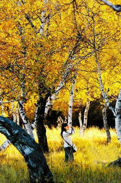 新疆塔里木轮台新疆轮台县塔河胡杨林风景区位于新疆巴音郭楞蒙古自