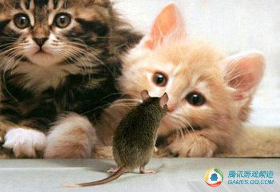 超萌 一群会功夫的动物