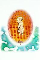 """组图:揭示胎儿生活奥秘 神秘的""""圣胎""""哭声"""