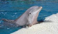 """盘点最隐蔽动物杀手:宽吻海豚""""激情杀人"""""""