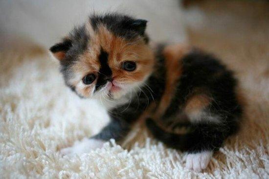 世界上最萌的小猫咪 - zigege的日志 - 网易博客