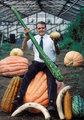 超常巨型蔬菜