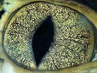 近距离看动物眼眸:哈士奇眼睛好似雪地(图)