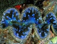十大吞食阳光动物:进行光合作用的贝类(图)