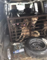 漳州一面包车内锁着16条狗 都是偷的快来认领!