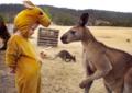 国际友谊日:萌娃和动物跨界友情暖化了
