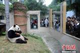 """大熊猫""""巴斯""""辞世 传奇一生见证中美友谊"""