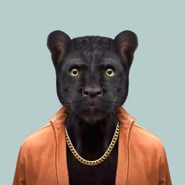 在这组照片中,他使用 ps 给各种动物穿上人类的衣服,将它们塑造成不一