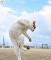 日本摄影师抓拍功夫猫咪