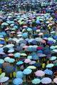 高三生雨中参加成人礼 双胞胎抢镜