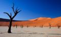 """全球唯一没有""""树"""",唯有沙丘与大海相伴,却高速发展的现代化城市"""