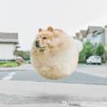 当动物们胖成个球是怎样的体验?