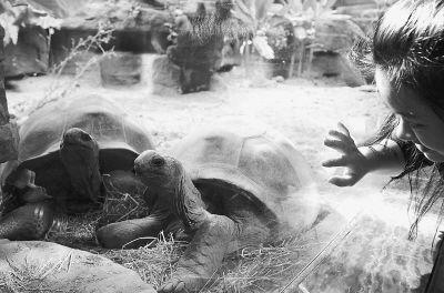 珍稀象龟抵达上海 将 亮相 上海世博会