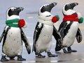 高清:圣诞掠影 全世界的狂欢