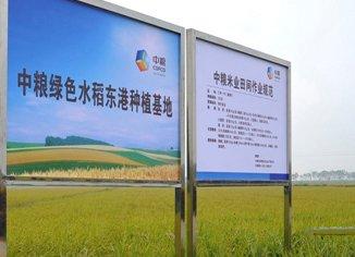 中粮绿色水稻种植基地(图)