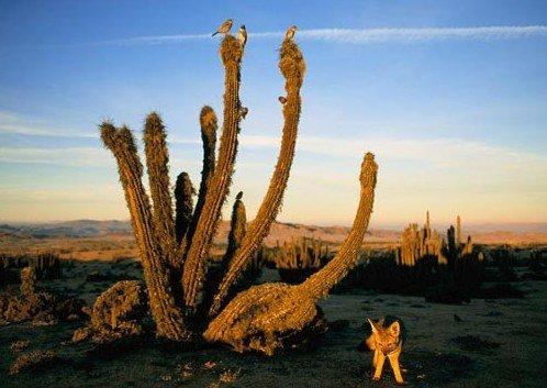 """智利阿塔卡马沙漠 """"从不下雨""""的神秘之所"""