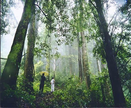 福建龙岩风景名胜-----红豆杉生态园