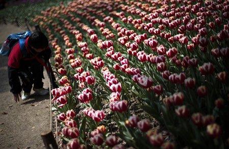 世博期间逛共青森林公园 500万鲜花月月好看