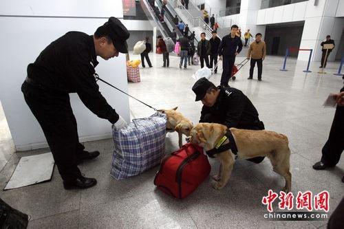 徐州铁路公安警犬Twins上岗巡防助阵世博