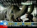 视频:看斯里兰卡狮子岩 大象孤儿院显温情