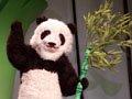 功夫熊猫世博摔跤赛