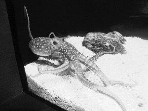 这样的宜人植物,温度,蜜蜂都海洋乐,上海很快水族馆里,新来的成员章鱼动物蛾图片