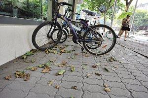 南京现近6年来最高气温 梧桐树提前落叶(图)