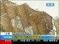 视频:西班牙馆藤条色差拼汉字 可抗12级大风